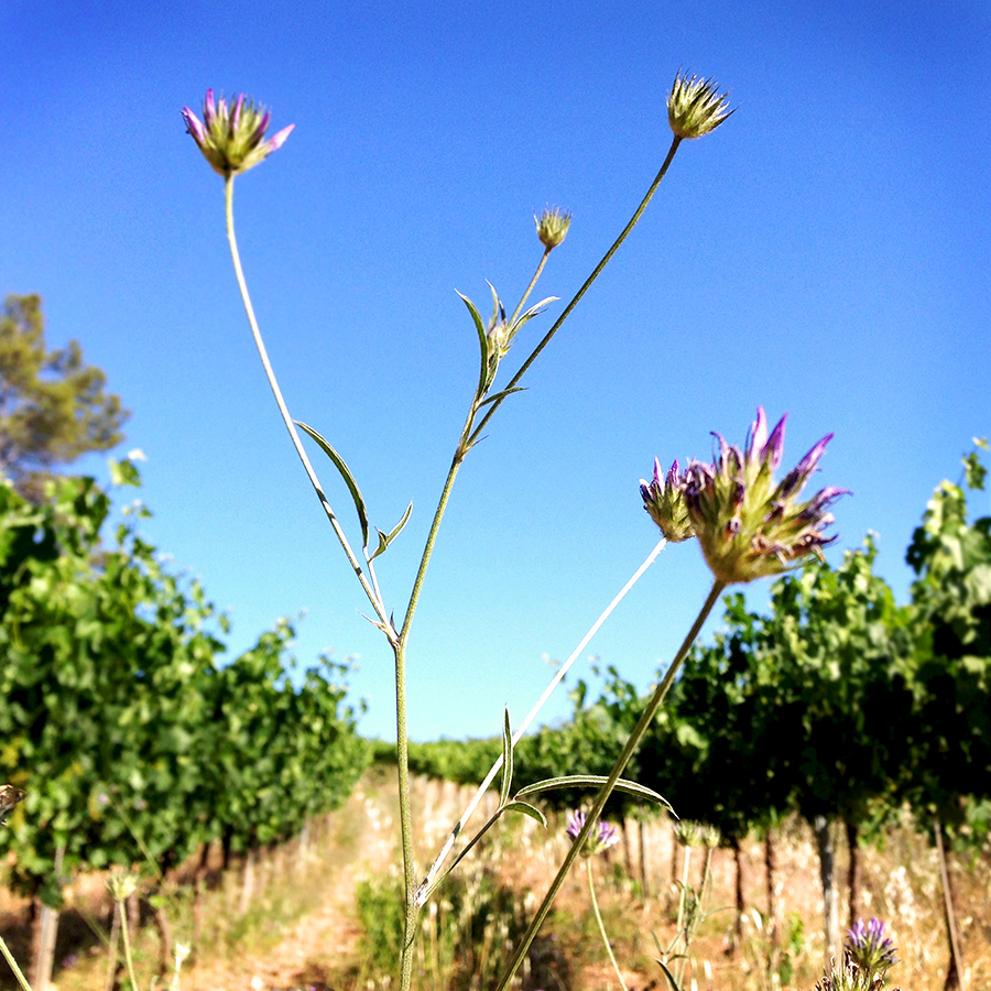 Vineyard biodiversity