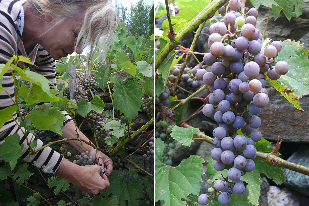 Deirdre Heekin with Frontenac Gris grapes