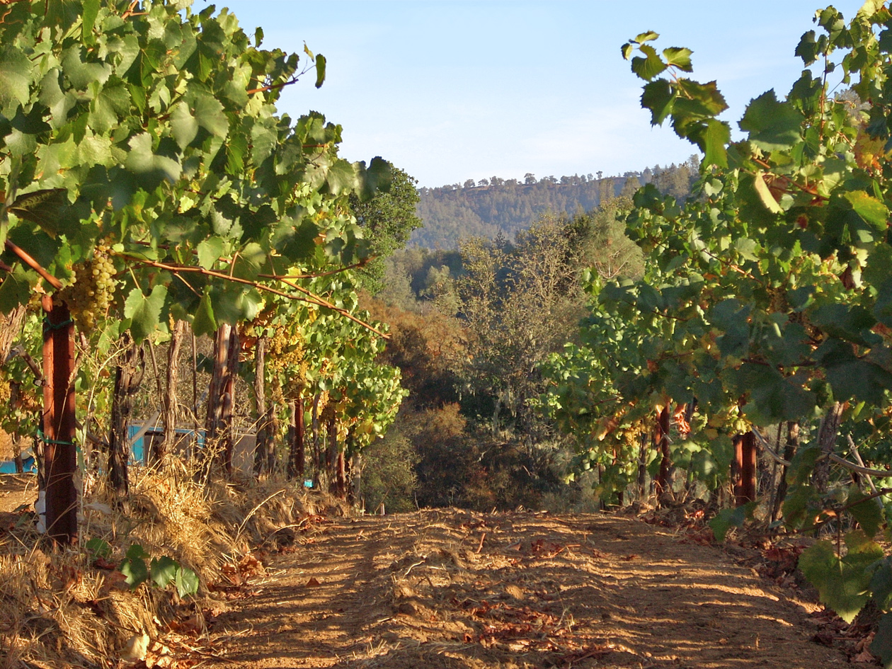 Calera Central Coast Chardonnay Vineyard - credit: Calera
