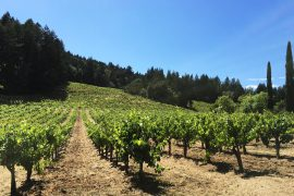 Stony Hill Vineyard, Napa, California - Don't Call Them Lesser Grapes