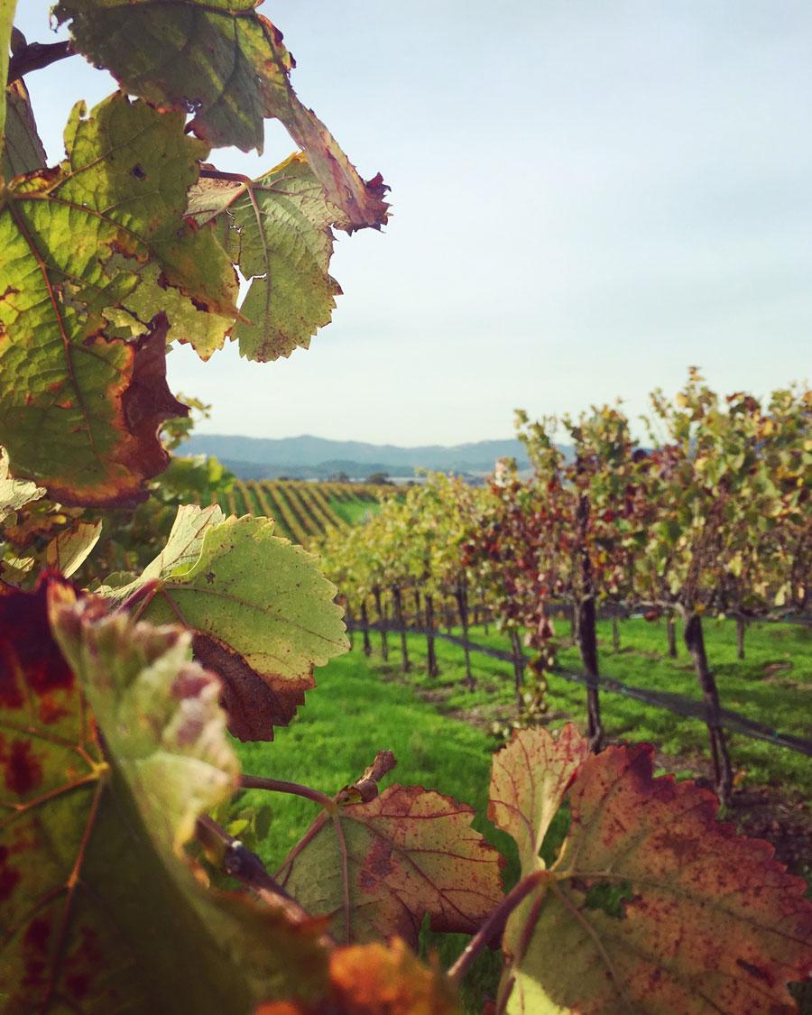 Blue Wing Vineyard in early November