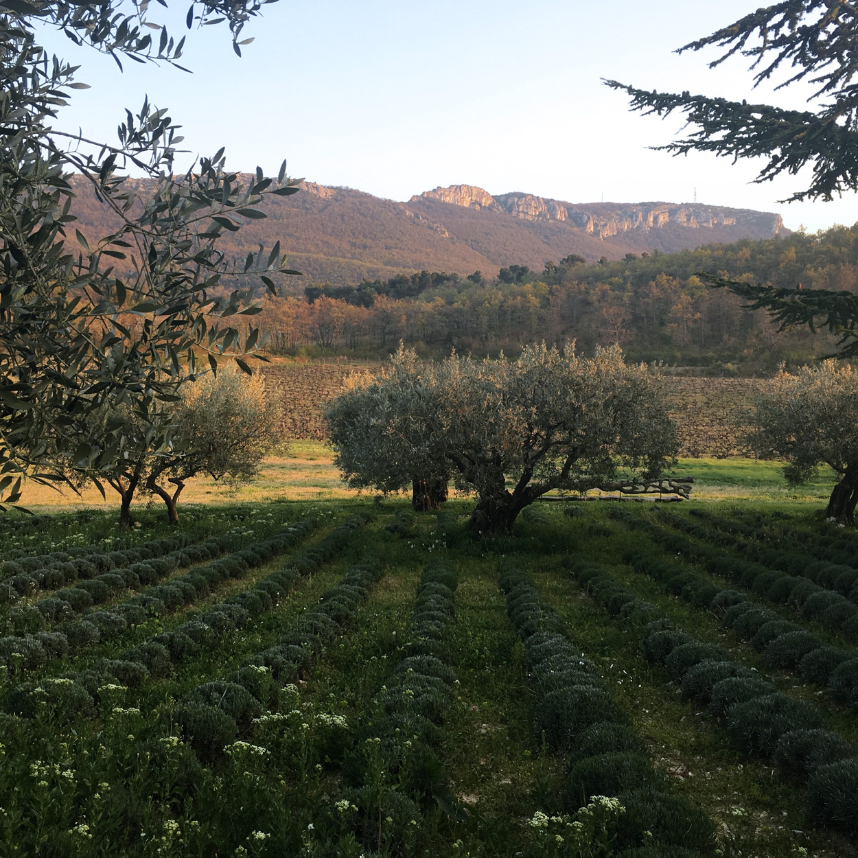Four Kingdoms and a Place: Committing to Wine of Terroir