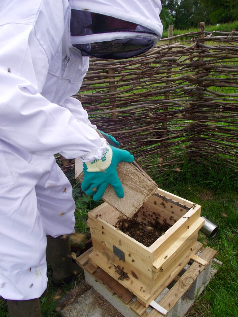 Natural beekeeping: Kieran Jefferson with his bees