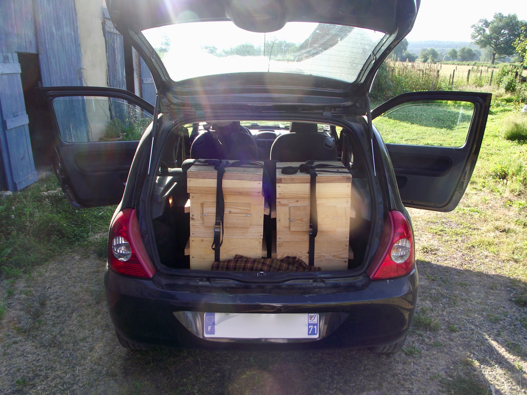 Hives in the car's boot