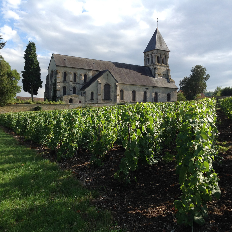Chapel amidst the Chardonnay vines in the Côte des Blancs, Champagne