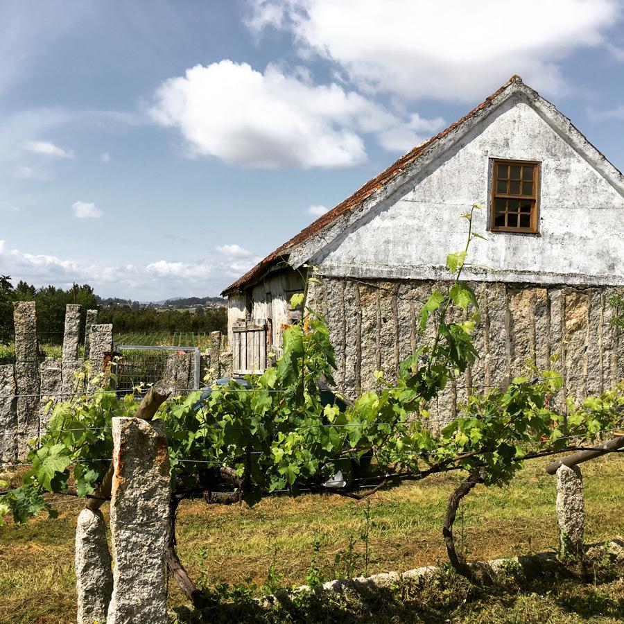 Wine farm in Vinho Verde, Portugal