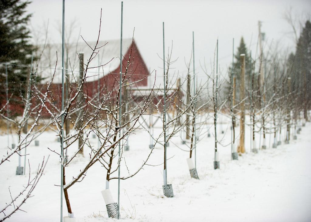 Eden Orchard