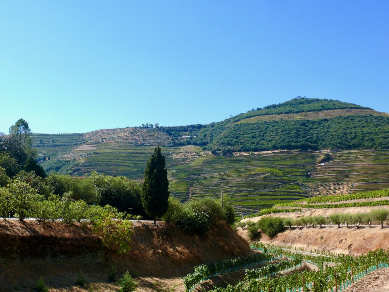 Terraced vineyards in the Douro