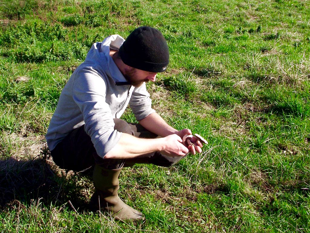 The author picking field mushrooms