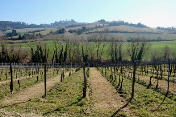 Romagna vineyards