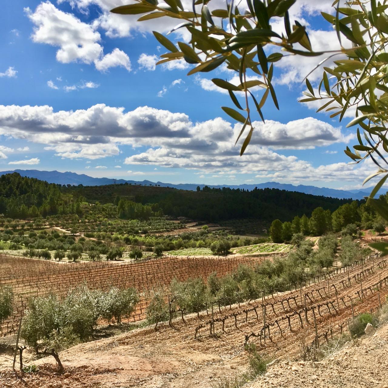 Morlanda vineyards